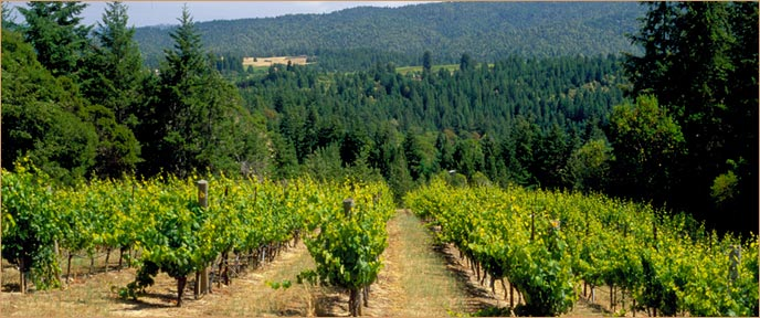 The Narrows Vineyard