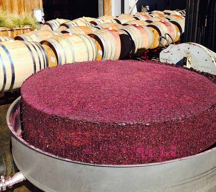 Pinot Noir grape skins