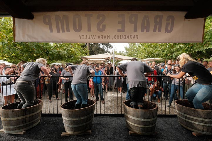 Napa Valley fall annual grape stomp competition at Paraduxx