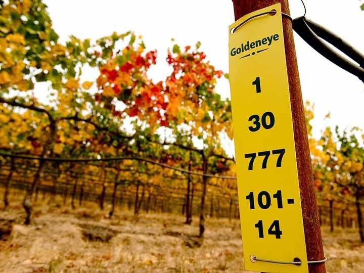 Vineyard marker